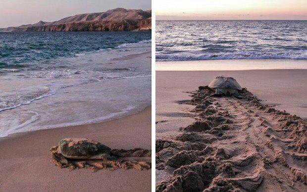 مسقط عمان ویزا دریا
